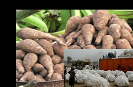 CEMAC : hausse des cours des produits d'exportation